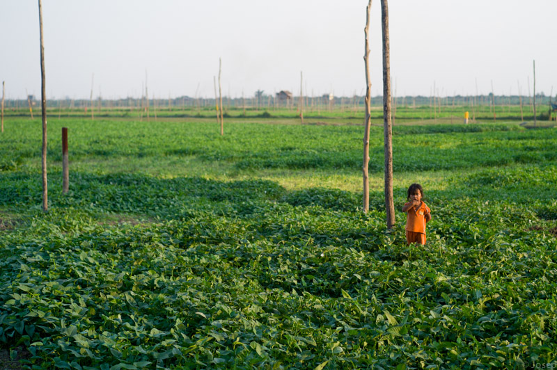 Cambodia: camps de cultiu
