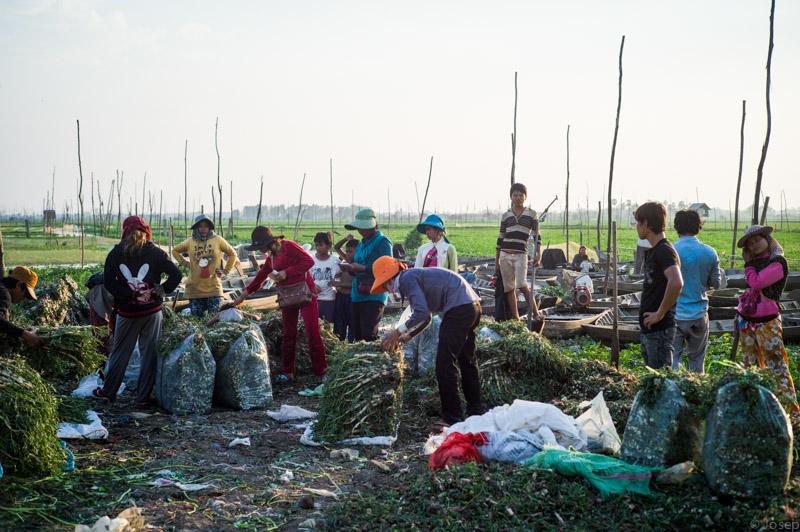 Cambodia. La feina al camp