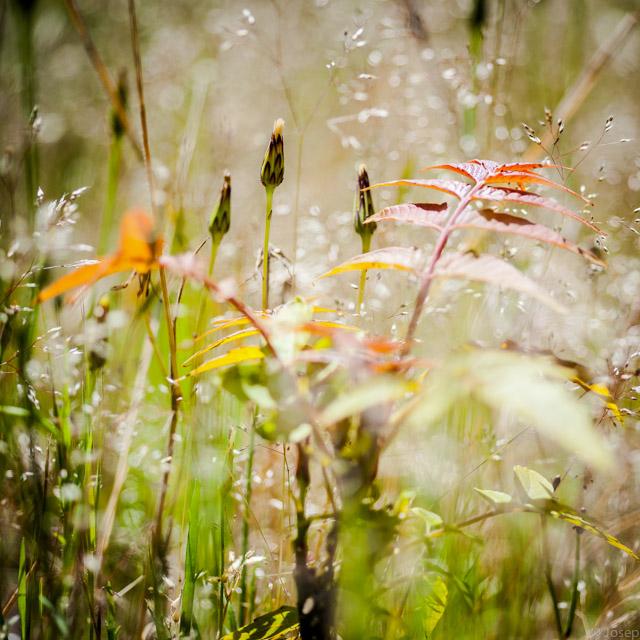 Petit roure entre les herbes...
