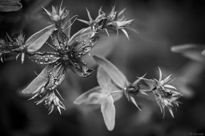 Natura en blanc i negre