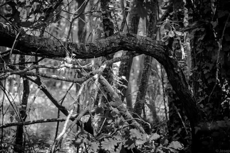 Una mica de bosc...